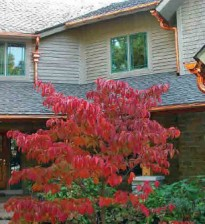 Какой материал для крыши выбрать?