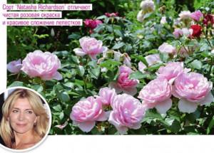 История названий роз