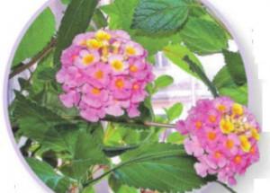 Диковинный сад на Кубани