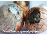 Болезни лука, картофеля и их лечение