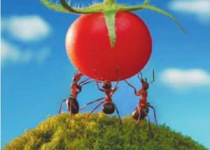 Как протекает жизнь в муравейнике