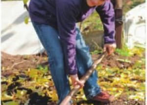 Советы садоводам, что делать осенью