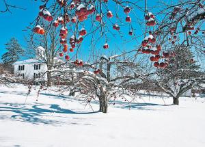 Как резкая смена погоды могут повлиять на сад