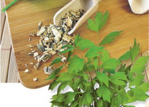 Любисток выращивание и уход - 5 секретов
