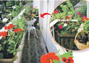 Как оформить балкон цветами - советы