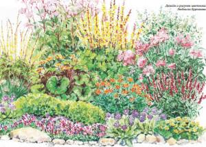 Клумба из влаголюбивых растений для сада