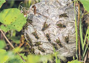 Первая помощь от укусов пчел, шмелей, ос