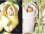 Орхидея родила младенца