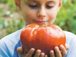 Гиганты и поклонники - огромные овощи