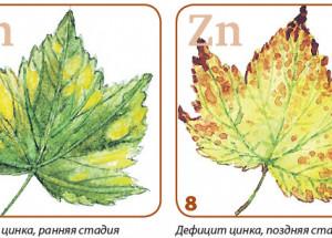 Меняется цвет листьев растений – что делать?