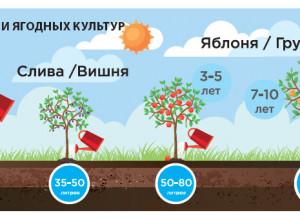 Подземный полив деревьев