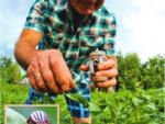 7 способов как эффективно бороться с колорадским жуком на даче