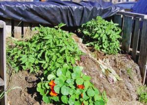 Как сделать компост - советы от садоводов
