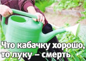 Рекомендуемое количество воды для полива растений
