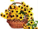 9 цветков-многолетников, цветущих в сентябре