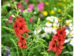 Новые виды цветов с выставки в Челси 2015