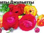 Ранункулюс - цветок Джульетты