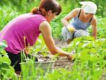 12 способов как избавиться от сорняков
