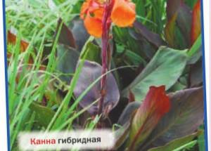Подбираем водные растения для пруда, водоёма