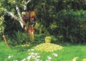 Планировка сада от семьи Сергеевых
