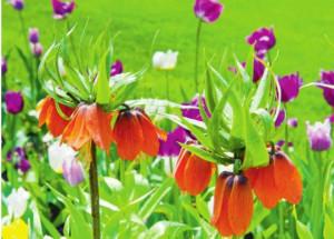 Уход уход за луковичными цветами