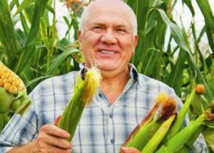 Пару советов как вырастить сладкую кукурузу