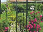 Плетистые розы для арки