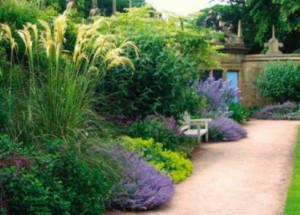 Декоративные злаки для сада