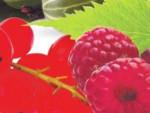 Как правильно сажать ягодные кустарники