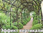 Декоративные лианы для сада