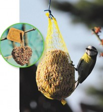 Чем подкармливать птиц в кормушках?