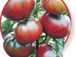 Новые сорта помидор 2015
