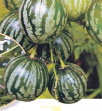 Выращивание тзимбало