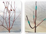 Правильная прививка деревьев