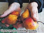 Первоапрельская груша
