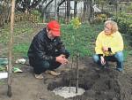 Улучшение почвы - как правильно и без ошибок