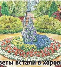 Цветник из однолетников со схемой