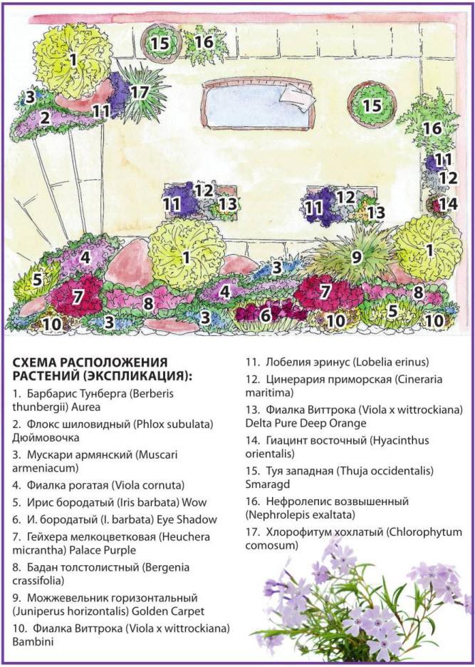 Схема расположения растений в саду