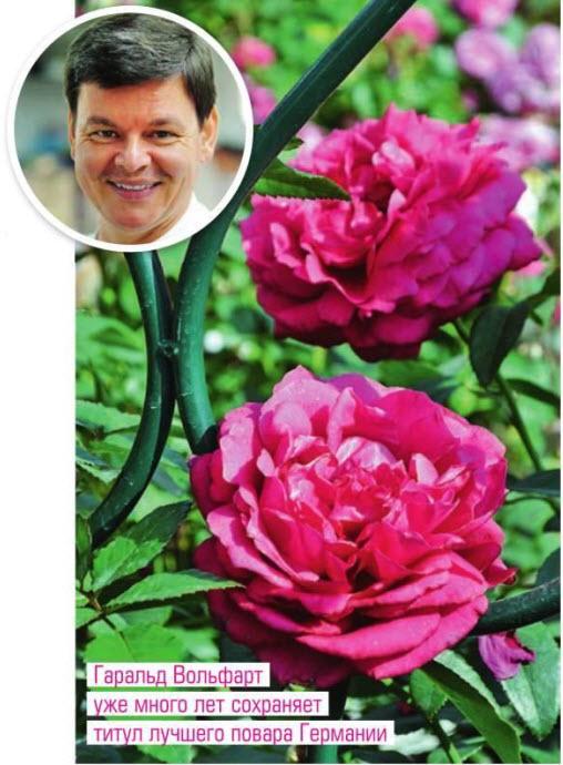 сорт розы 'Harald Wohlfahrt' и 'Dieter Muller'