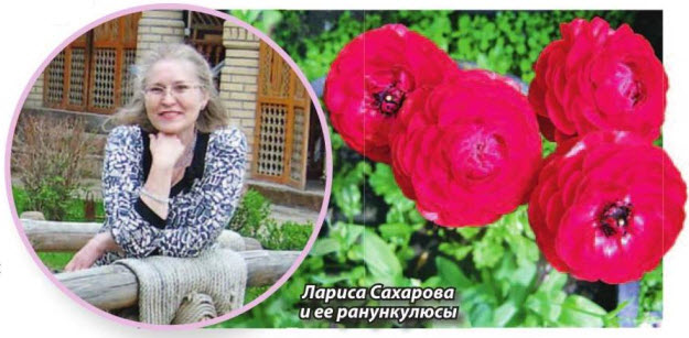 Ранункулюс (лютик садовый)
