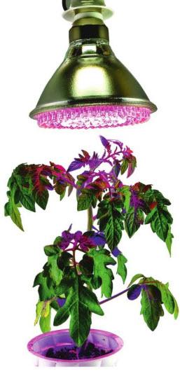 Светодиодная лампа для рассады