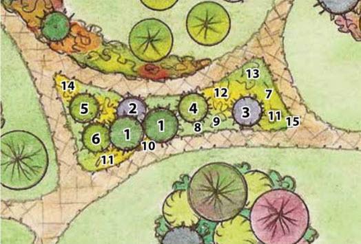 Схема расположения хвойных растений в саду
