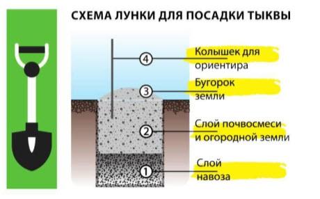 Схема лунки для посдаки тыквы