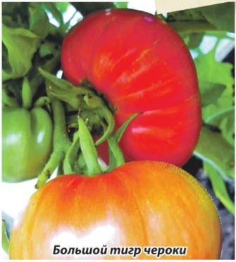 помидор Большой тигр чероки