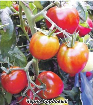 помидор Черно-бордовый