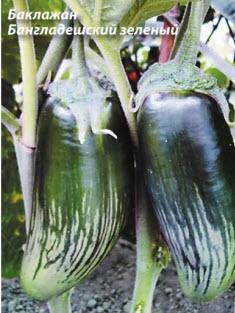 Баклажан Бангладешский зеленый