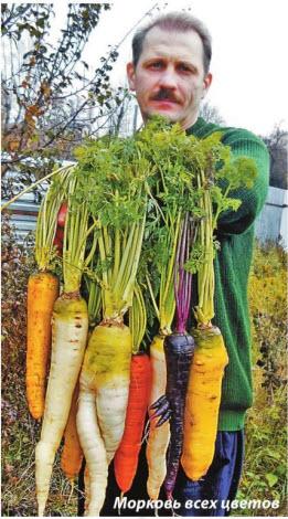Морковь разных цветов