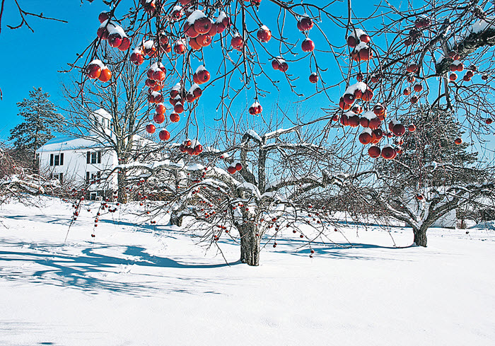 сад зимой, зимний сад