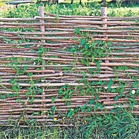 Плетень из ивы