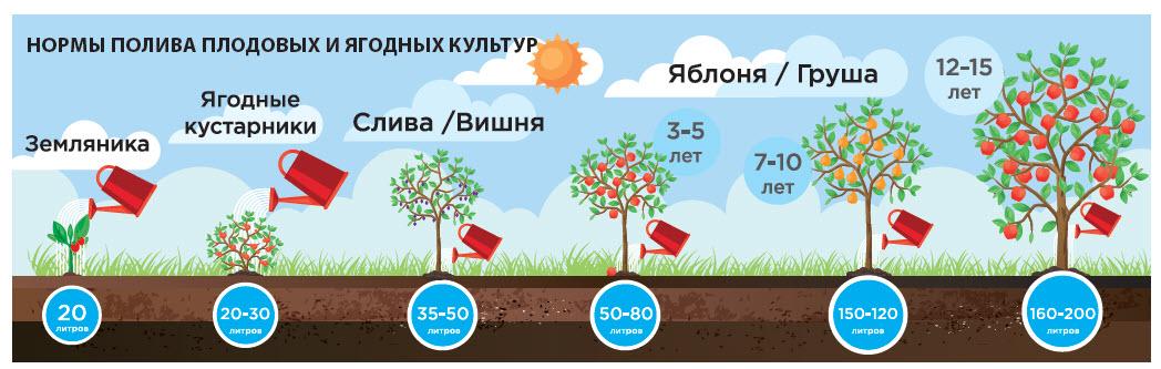 Нормы полива плодовых и ягодных культур